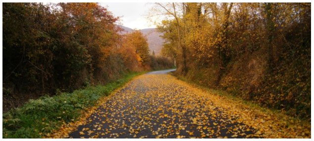 road with leaves in fall